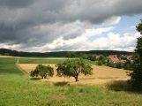 FDP Leimen ist ganz klar gegen ein Wohngebiet Weidenklinge II und für eine behutsame Entwicklung von Gauangelloch